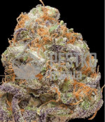 God's Green Crack Reg